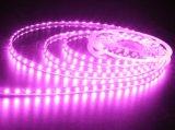 Bester Preis 60 LED pro Messinstrument Gleichstrom 12V imprägniern SMD 5050 flexibles RGB LED Streifen-Licht