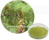 Reiner natürlicher Pflanzenantioxidansauszug Dihydroquercetin/Taxifoliol/Distylin 80%~98%