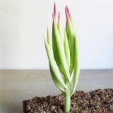 最新のデザイン人工的なプラント装飾的な卸し売りBonsaiの花