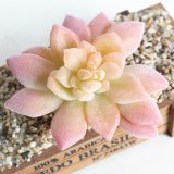 Красивое оформление семьи Искусственные растения Succulents растений