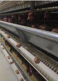 un tipo pollame automatico alloggia la gabbia di strato