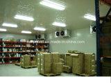 Chambre froide/Cold Storage pour viandes et poissons, Blast congélateur