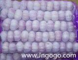 Aglio bianco normale di nuova alta qualità fresca del raccolto