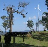 Grid Wind Turbine Generator Power 3000W System 떨어져