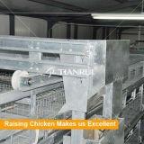 Équipement agricole de volaille de poulet pour la production de viande Broiler Cage