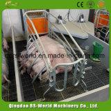 Клеть высокой отростчатой свиньи порося