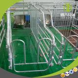 Tenda instalada fácil da gestação da fábrica do irmão de Deba na venda