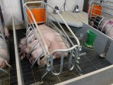 Клеть свиньи оборудования свиньи Китая порося