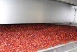 Edelstahl-industrielles Frucht-Gemüse-trocknendes Gerät
