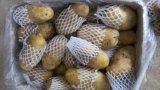 De verse Prijs van de Aardappel van de Aardappel In het groot voor de Uitvoer