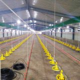 Оборудование цыплятины контроля за состоянием окружающей среды с домом стальной структуры
