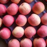 Goldenes Supplier für Fresh Fruits Fresh Apple