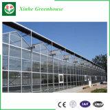 Serre chaude en verre de tunnel pour la plantation
