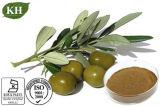 Estratto verde oliva naturale del foglio di 100% con oleuropeina Hydroxytyrosol