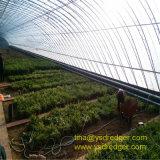 Serre chaude en plastique agricole/commerciale des meilleurs prix à vendre