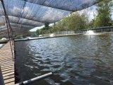 Повышение качества воды Unigrow на любом акватическом Breeding