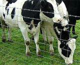 Clôture de bovins