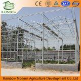 상업적인 다중 경간 농업 유리제 온실