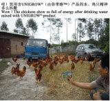 Crescimento dos rebanhos animais de Unigrow que promove para a criação de animais da galinha
