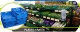 Casella asciutta di plastica di giro d'affari della frutta della casella di memoria della frutta di più grande immagine