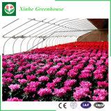 花のための農業のプラスチック温室