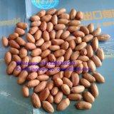 Núcleo sin procesar largo 28/32 del cacahuete de la categoría alimenticia de la dimensión de una variable de la nueva cosecha