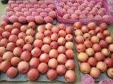 신선한 Apple 분홍색 숙녀 과일