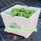 Caixas de empacotamento da fruta plástica ondulada de Apple