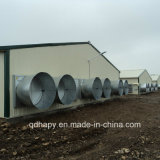 Agricultura Chiken Prefab House com equipamento Procution