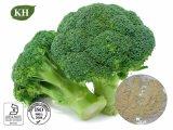 Broccoli extracto que contiene Rich ácido ascórbico