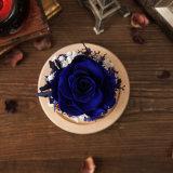 Creatieve Bloemen voor de Gift van de Verjaardag van de Dag van de Valentijnskaart