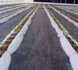 Telas de la barrera de la estera de la cubierta de tierra/de Weed de los PP/de Weed con el cuadrado de Rutet