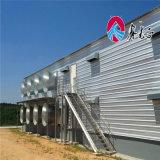 Het lichte Huis van het Gevogelte van de Structuur van het Staal met het Voeden van de Kip Machine