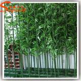 Plantas de bambú afortunadas
