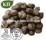 Champignon Shiitake Polysaccharides extrait de 30 %