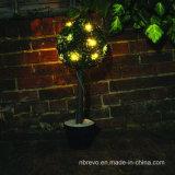 Indicatore luminoso solare dell'albero del giardino (RS116)