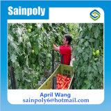Estufa de policarbonato de baixo custo hidropônica para agricultura