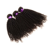 Virgin 100% Afro indiano Kinky Curly Hair Hot Sale Afro Kinky Hair Weaving Grade 7A Afro Kinky Human Hair