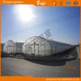 Vegetable Planting를 위한 아름다운 Plastic Film Greenhouse