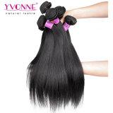 Tessuto diritto naturale dei capelli umani di vendite di Yvonne dei capelli caldi di Remy