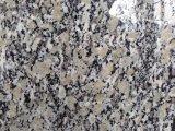 De gouden Plak van de Herfst/van het Graniet voor Keuken/Badkamers/Muur/Vloer
