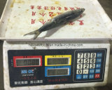 Sardinha chinesa de Sagax do oceano com melhor preço
