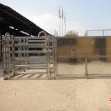 Corsa galvanizzata della cambiale delle 3 pecore di modo del rifornimento della fabbrica forte
