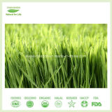 L'iso ha certificato la polvere organica dell'erba del frumento del rifornimento della fabbrica