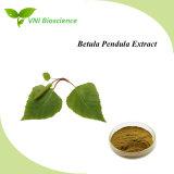 Certifiée ISO acide Betulinic /Betula pendula extrait de plante/suédois Extrait de bouleau