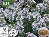 Производитель природного тимьян извлечения /Thymus Vulgaris L 20%, 30%, Thymol