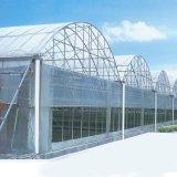 고품질 두 배 필름 다중 경간 Hydroponic 농업 녹색 집