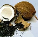 Ausstattung- mit Eigenmarkenholzkohle-Zähne, die Puder-Kokosnuss betätigtes Holzkohle-Puder weiß werden