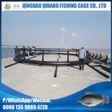 Marketsize Tilapia-Handelsfischzucht-Rahmen