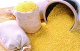 Millet chinois, Millet jaune, Nourrissant l'estomac, la thérapie diététique